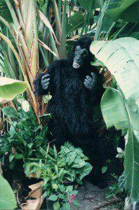Ape / Gorilla / King Kong